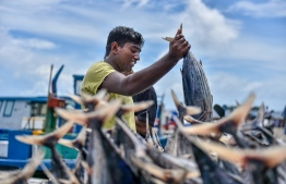 A man unloads the day's catch at the local fish market in Male' City. FILE PHOTO: NISHAN ALI / MIHAARU