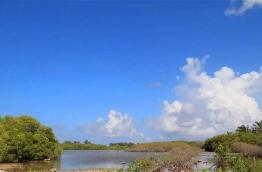 A mangrove in the island of Kulhudhuffushi in Haa Dhaal Atoll.