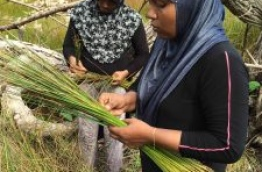 Leena collecting reeds from the nearby marshland. PHOTO/AISHATH NIYAZ