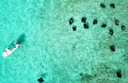 Snorkelling with Manta Rays at the UNESCO Biosphere Reserve Maldives in Baa Atoll. PHOTO/MANTA TRUST