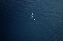 Aerial view of Dr Claire Petros, Dhafeena Hassan Ibrahim and Shaziya Saeed of the Stand Up for Our Seas team, on their paddleboards. PHOTO/STAND UP FOR OUR SEAS