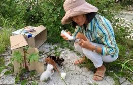 Noda bottle-feeding some kittens in reclaimed suburb Hulhumale'. PHOTO: NODA