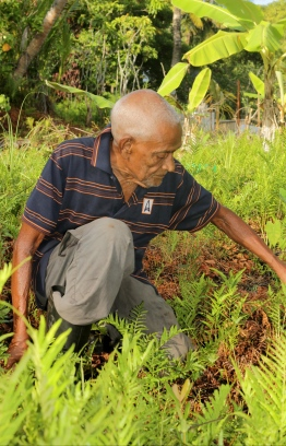 Abdulla Rafeeq tends to his fields in the early morning. PHOTO: HAWWA AMAANY ABDULLA / THE EDITION