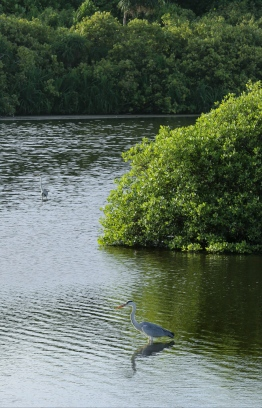 Enjoy excursions to Addu Nature Park, where adventure awaits among mangroves teeming with life. PHOTO: HAWWA AMANY ABDULLA / THE EDITION