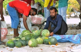 Fainu's farmers collect watermelons after their harvest. PHOTO: MIHAARU