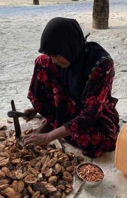 A woman cracks open the husk of Midhili tree (Indian almond) fruits to extract the almond seeds inside. PHOTO/MARIYAM MOHAMED