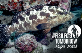 Fish for Tomorrow campaign poster. PHOTO/MALDIVES RESILIENT REEFS