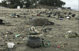 A dead sea turtle is seen on a beach in Cox's Bazar on July 12, 2020. - About 160 sea turtles, many of them injured after getting entangled in plastic waste, have been rescued after washing up on one of the world's longest beaches in Bangladesh, an official and conservationists said on July 15. PHOTO: SUZAUDDIN RUBEL / AFP