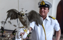 A customs officer holds on his arm a falcon that was recovered from illegal captivity, during a press briefing with customs authorities in Karachi on October 17, 2020.  Rizwan TABASSUM / AFP