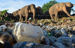 (FILES) In this file photo taken on May 11, 2018, wild elephants stand near an electric fence as they rummage through garbage dumped at an open ground in the village of Digampathana, in north-central Sri Lanka. - Sri Lanka will build trenches to prevent wild elephants foraging at open garbage dumps near wildlife sanctuaries and ingesting plastic waste that kills them, the government announced on November 30. (Photo by LAKRUWAN WANNIARACHCHI / AFP)