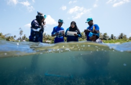 Members of the Resilient Reefs Project collect data. PHOTO: MATT PORTEUS / OCEAN CULTURE LIFE
