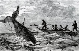 The viral 'Wellerman' sea shanty is also a window into the remarkable cross-cultural whaling history of Aotearoa New Zealand. PHOTO: THE CONVERSATION