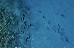 View of the breathtaking Maldivian ocean and its marine life -- Photo: Aishath Shifa Shafeeg